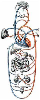 normale sauerstoffsättigung im blut